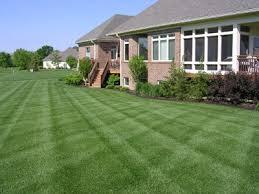 Perfect Grass, opinioni, recensioni, forum, commenti