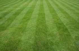 Perfect Grass, effetti collaterali, controindicazioni